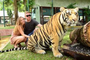 Тайланд, медовый месяц, тигры, море, природа, свадьба, отдых зимой